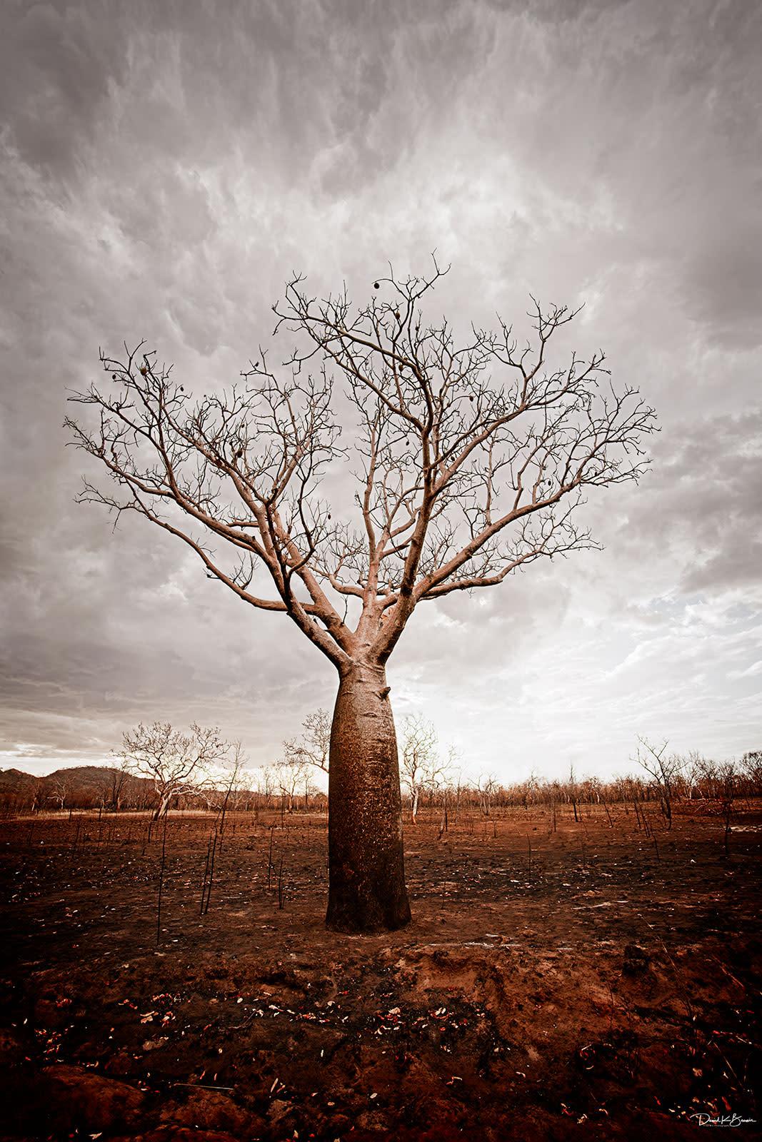 The baobab  msw5tt