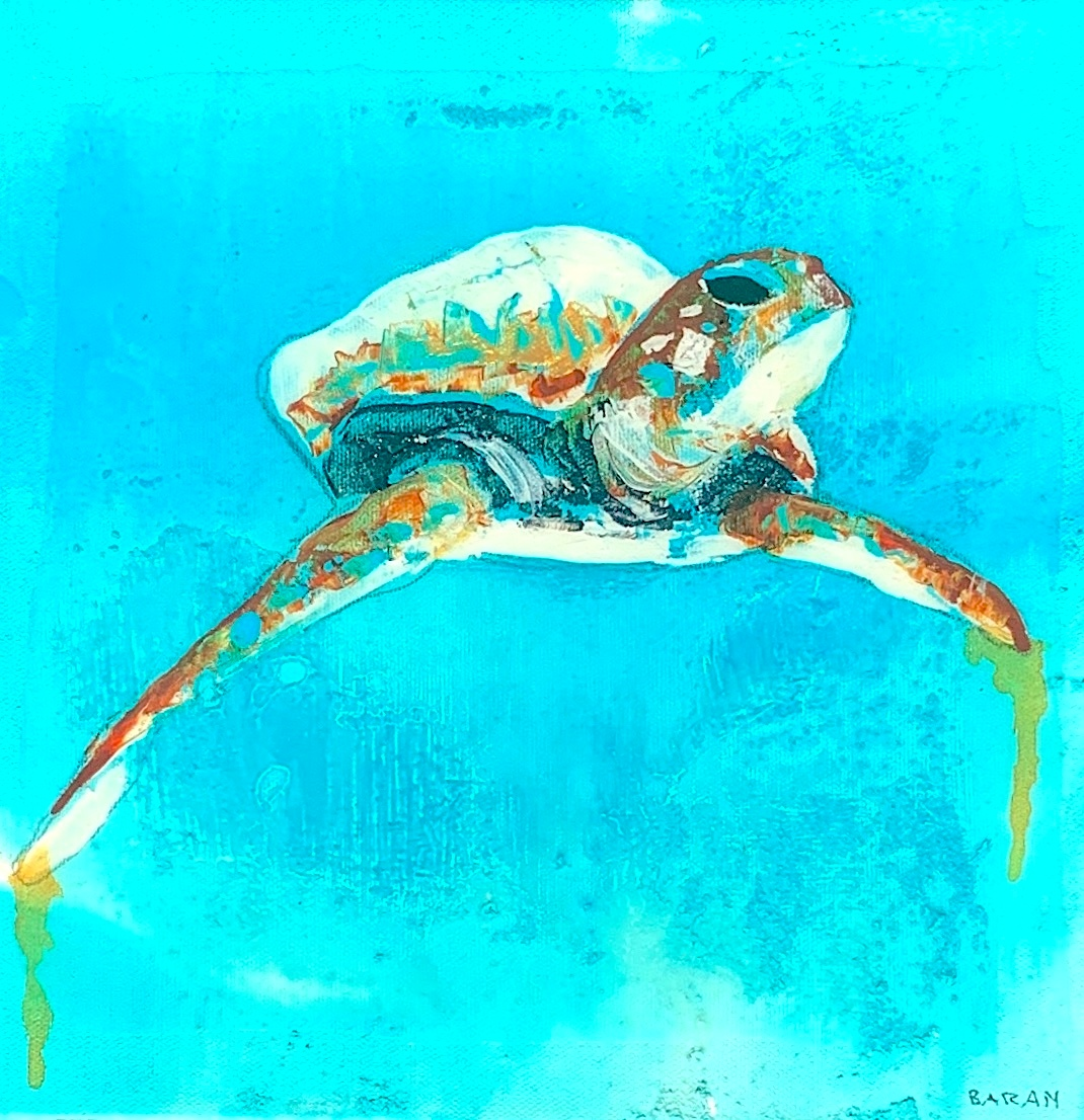John baran   maui turtle afz8ex