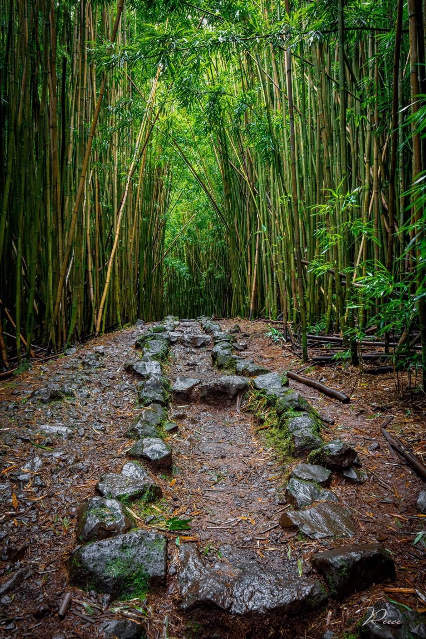 Joe reece   enchanted forest   bamboo forest landscape luxury photography road to hana curvy hiking trails adventure green evo art maui front street lahaina gallery hawaii xf0fat