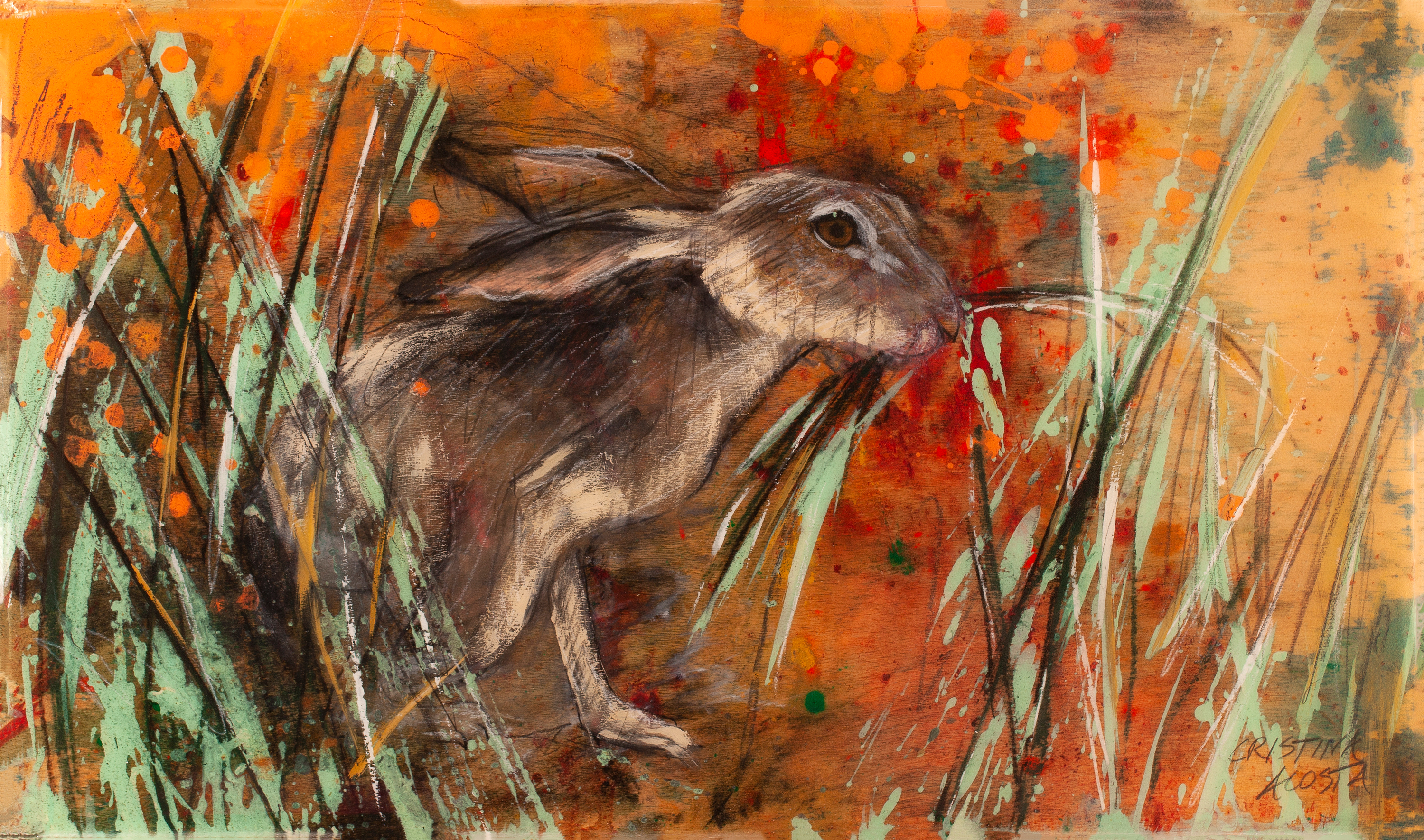 California poppies hare in grass ta3hew