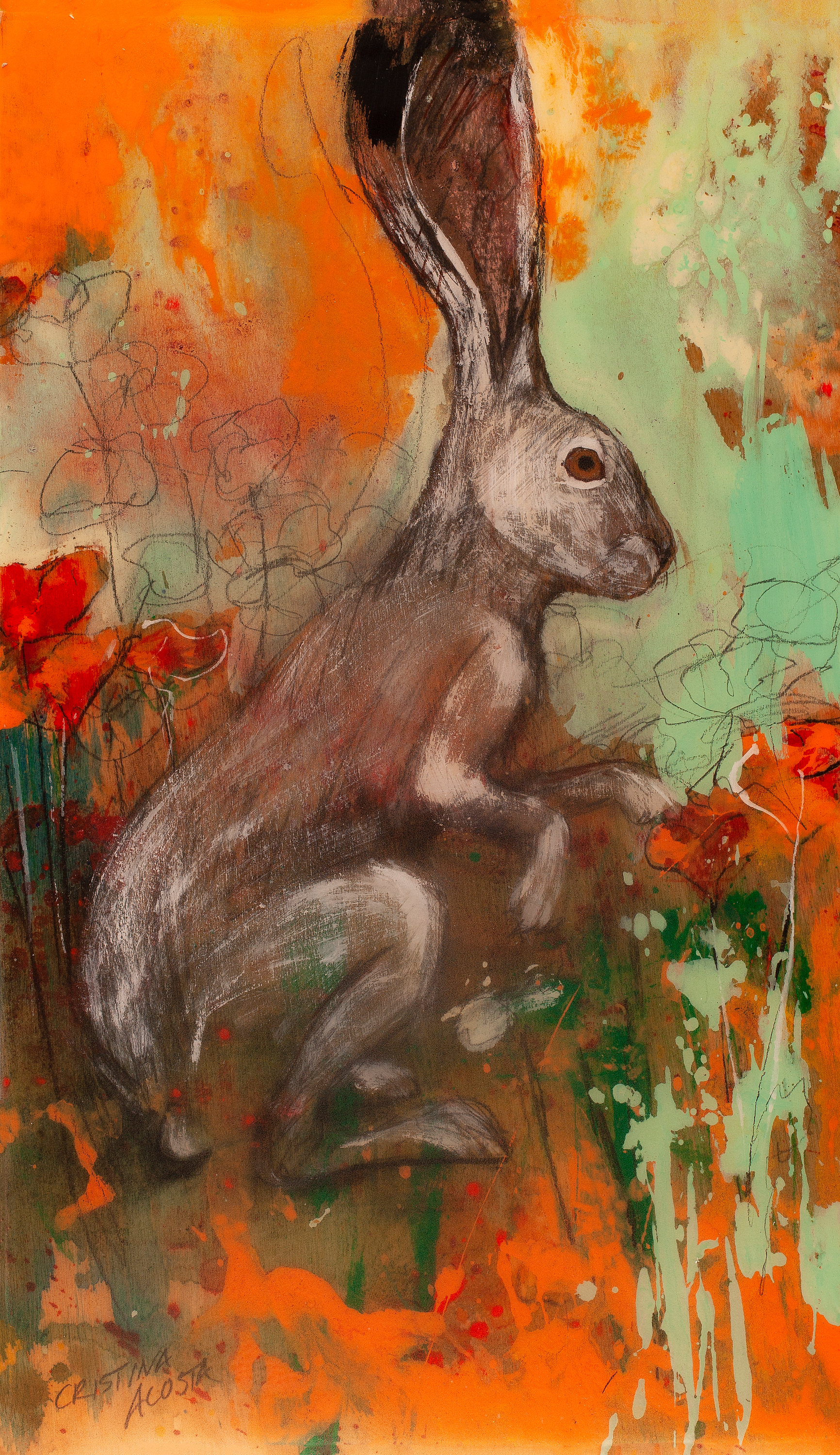 California poppies hare i unpqsz