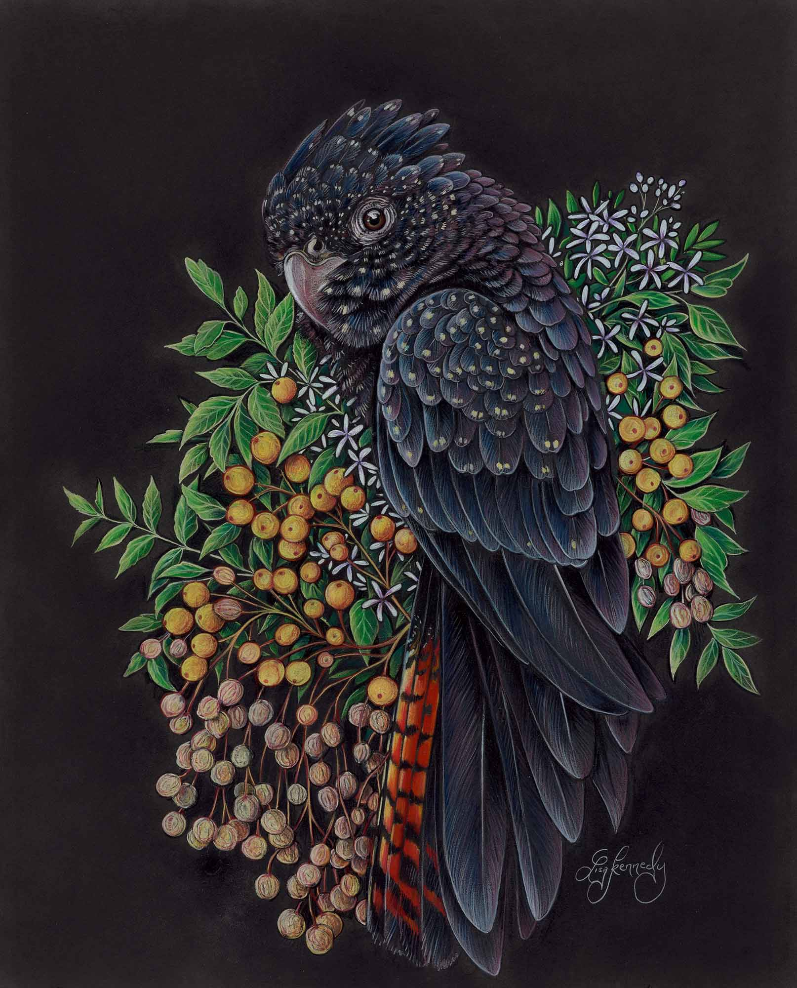 Lisa kennedy 011 red tailed black cockatoo 2000px ivdjbm