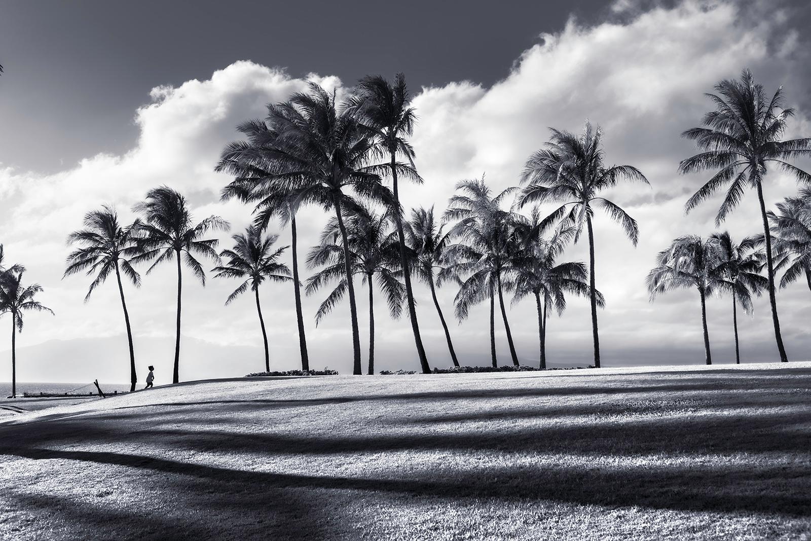 Tropical shadows 1600pxw o98fap
