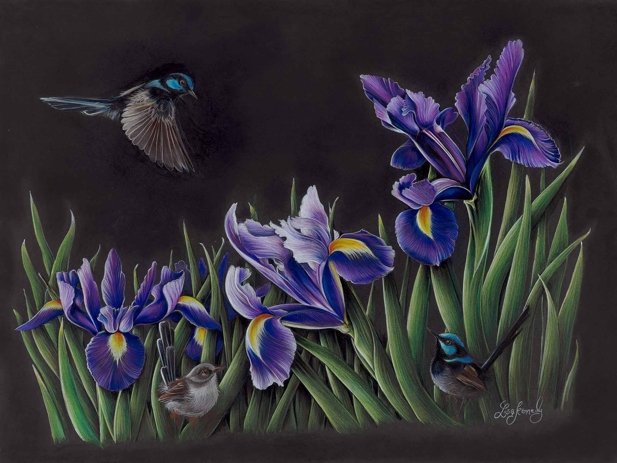 Lisa kennedy 014 iris garden 2000px cv1ip2