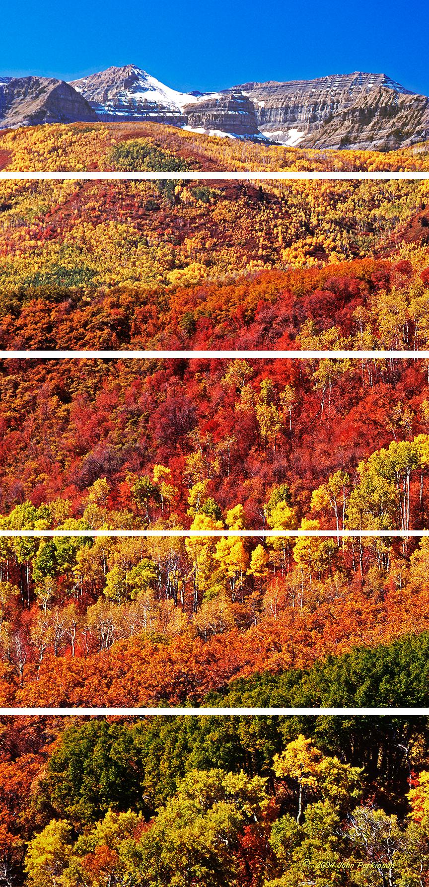 The colors of timpanogos dwpeni