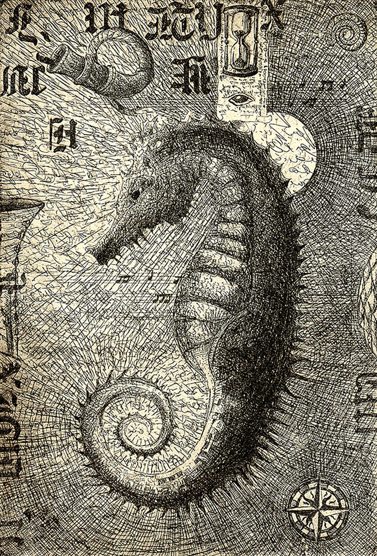 Seahorse ed4aqh