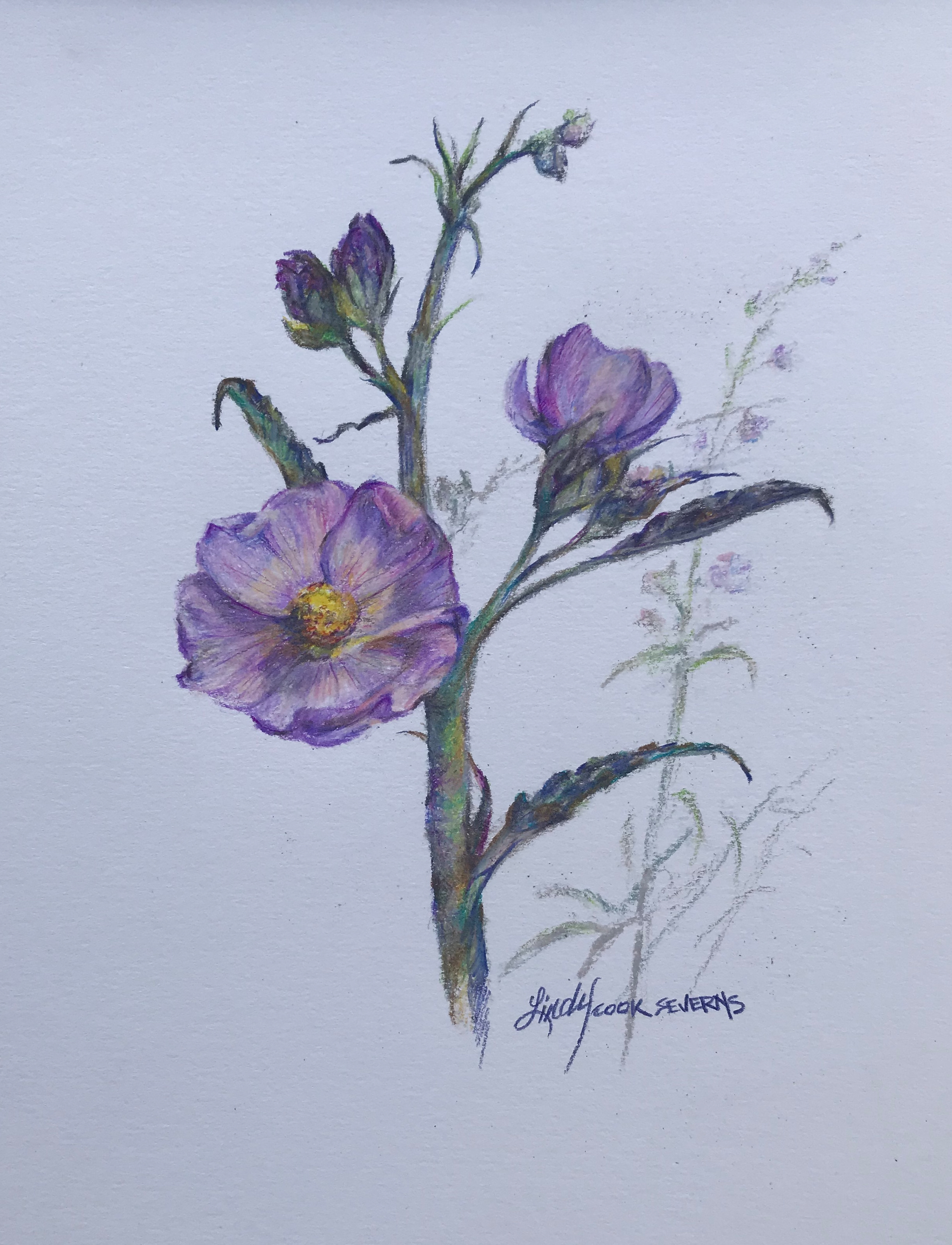 6c18 penstemon 8x10 colored pencil lindy cook severns vikmmx