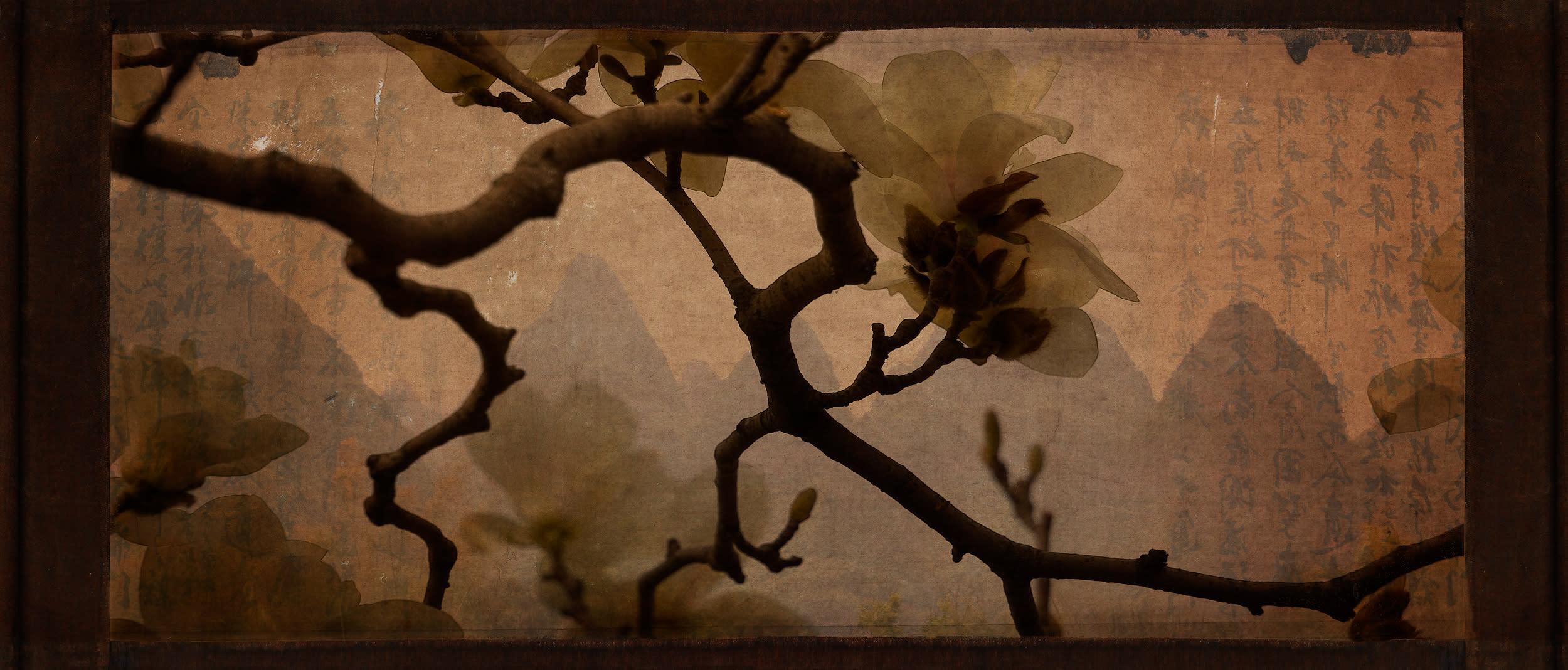 China magnolia blossoms 40x17 ivptpa