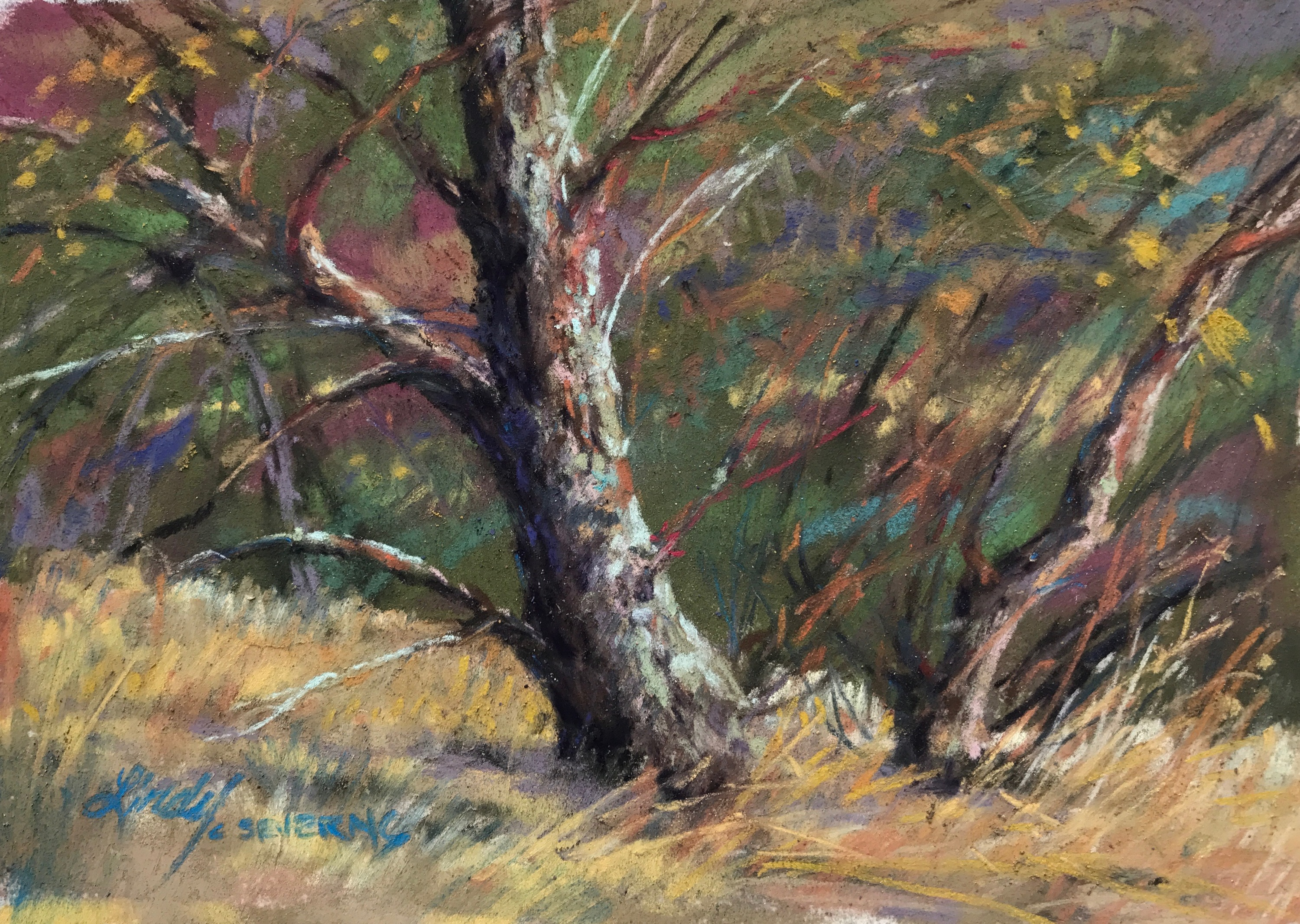 15f17 a singing mossbacked tree 4x6 in plein air pastel lindy c severns by3ob1