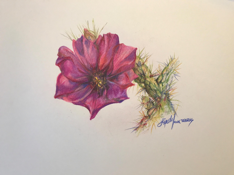 12e17 cholla bloom 8x10 colored pencil lindy c severns qcgnds