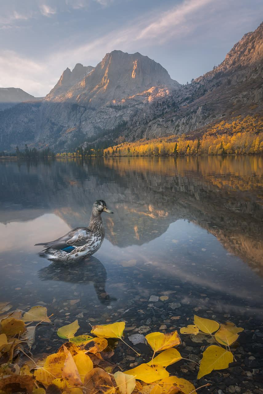 The duck whisperer n5q6i5