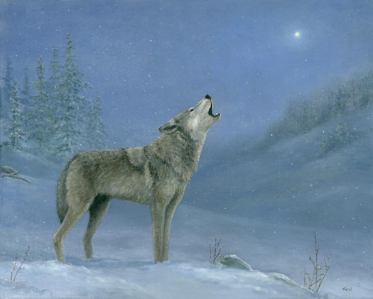 Wolf.0 bu1f6o
