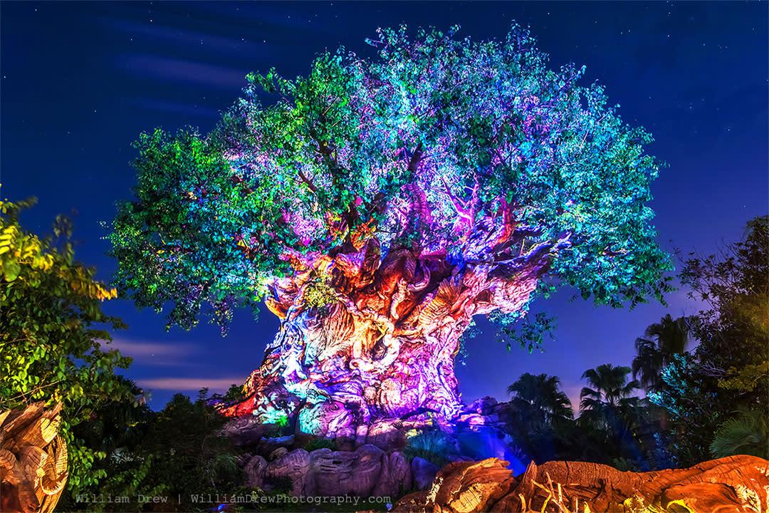 Tree of life awakenings sm dfa70k