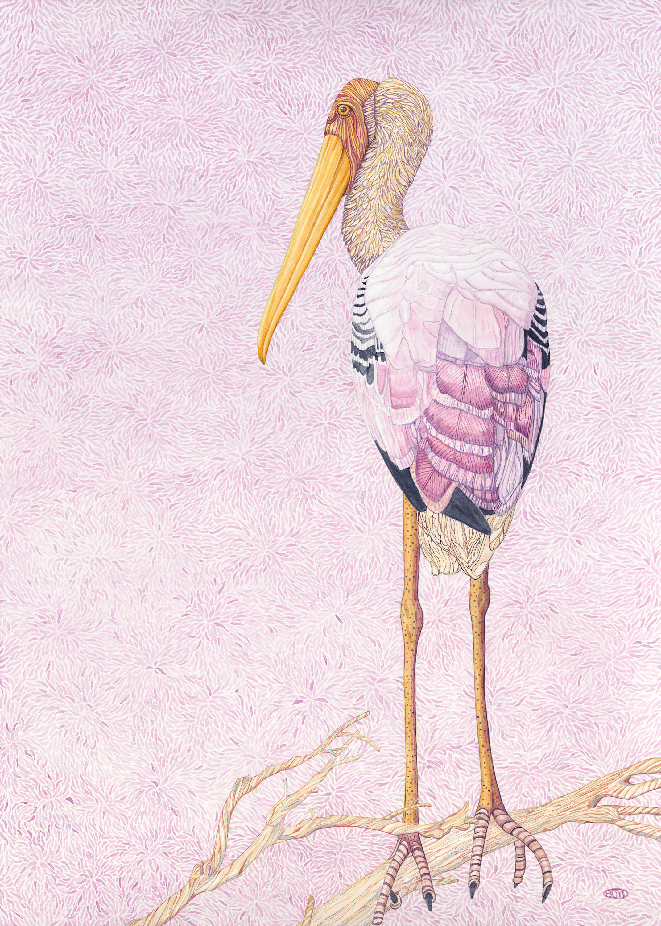 Painted stork 300ppi conmdn