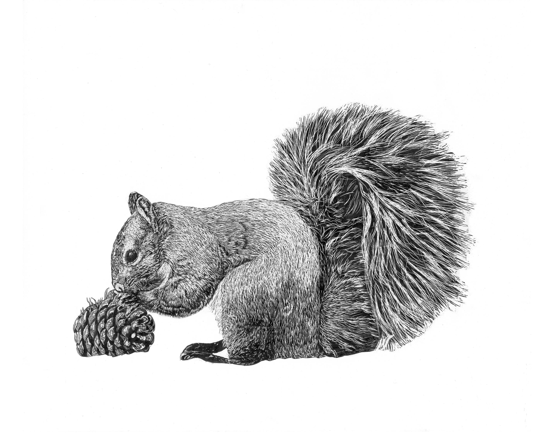 Squirrel acbqvs
