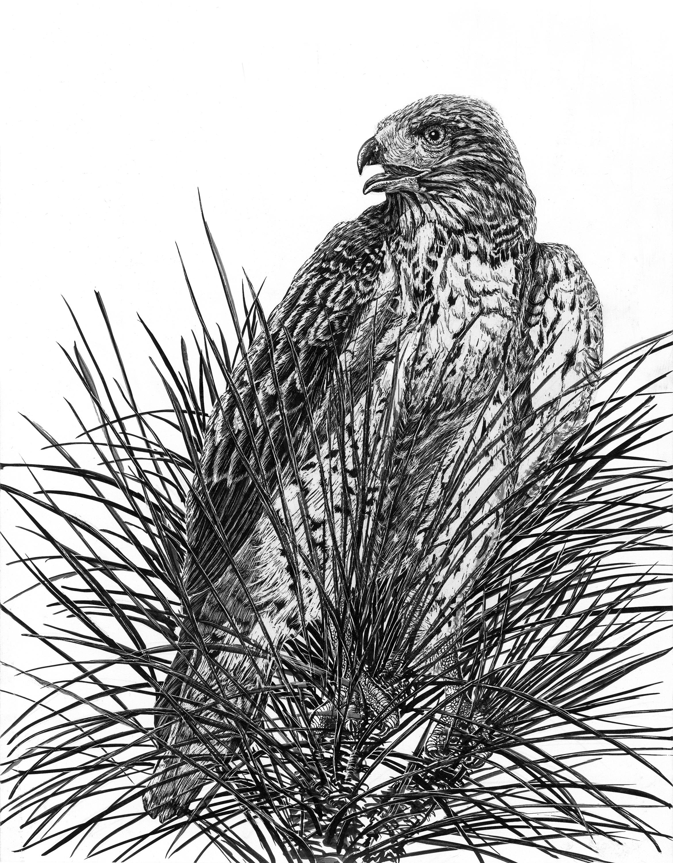 Hawk h3hprh