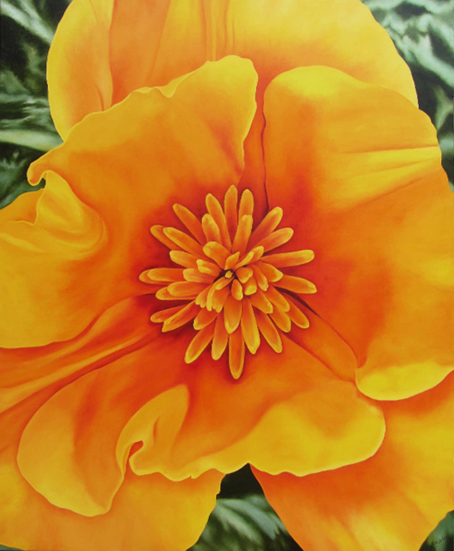 Happy california poppy 66hx54w oil 72dpi 1920pxh nqhtz7