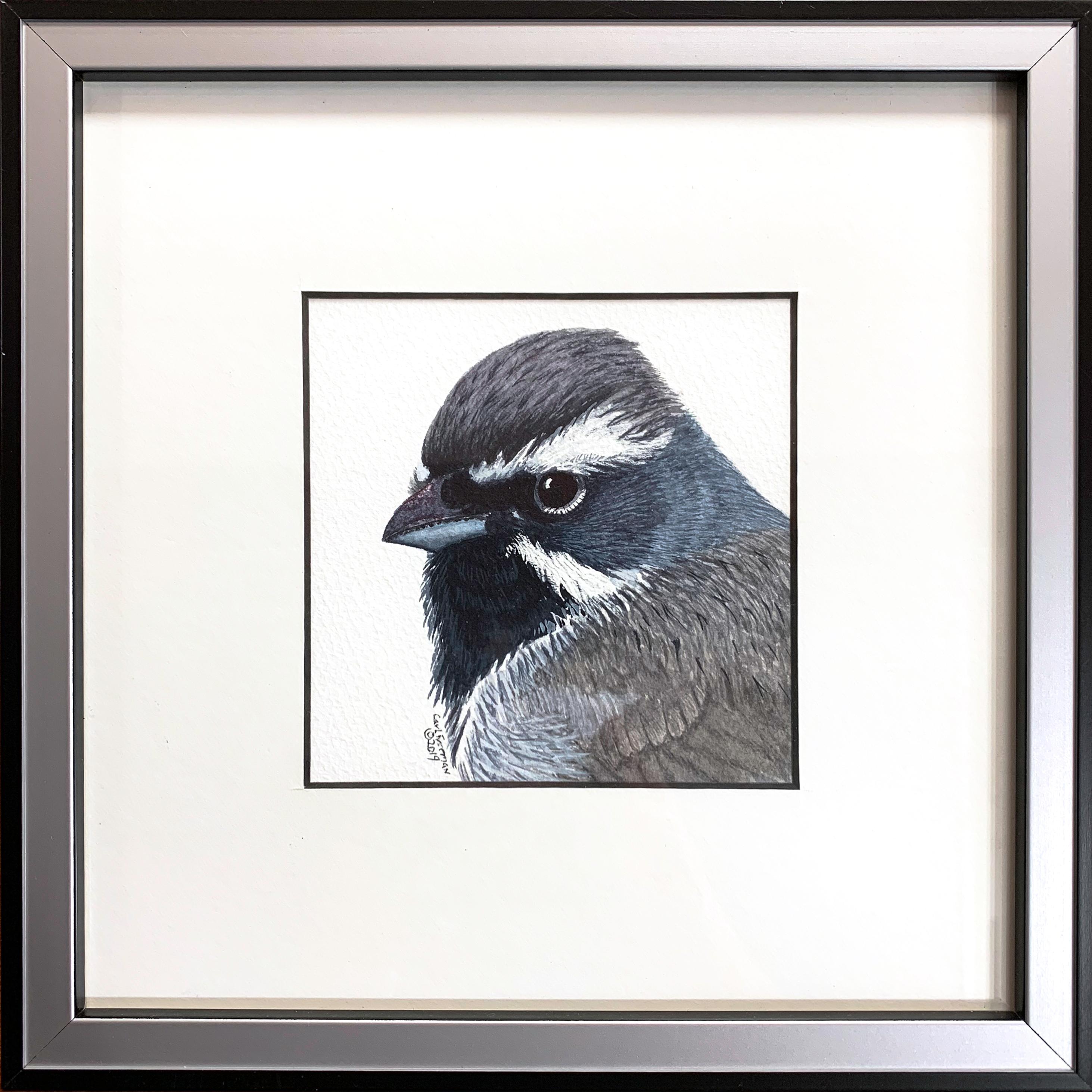 Black throated sparrow framed rpugey