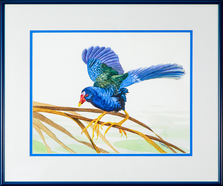 Purple gallinule framed edit uaramw
