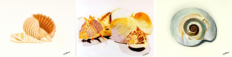 Shells triptych lfohac