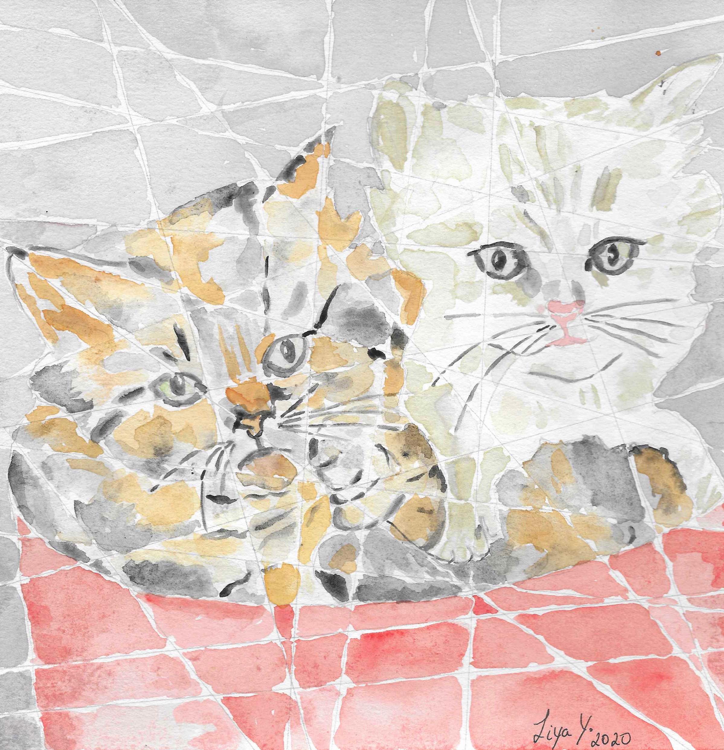 Cats originals hv9k66