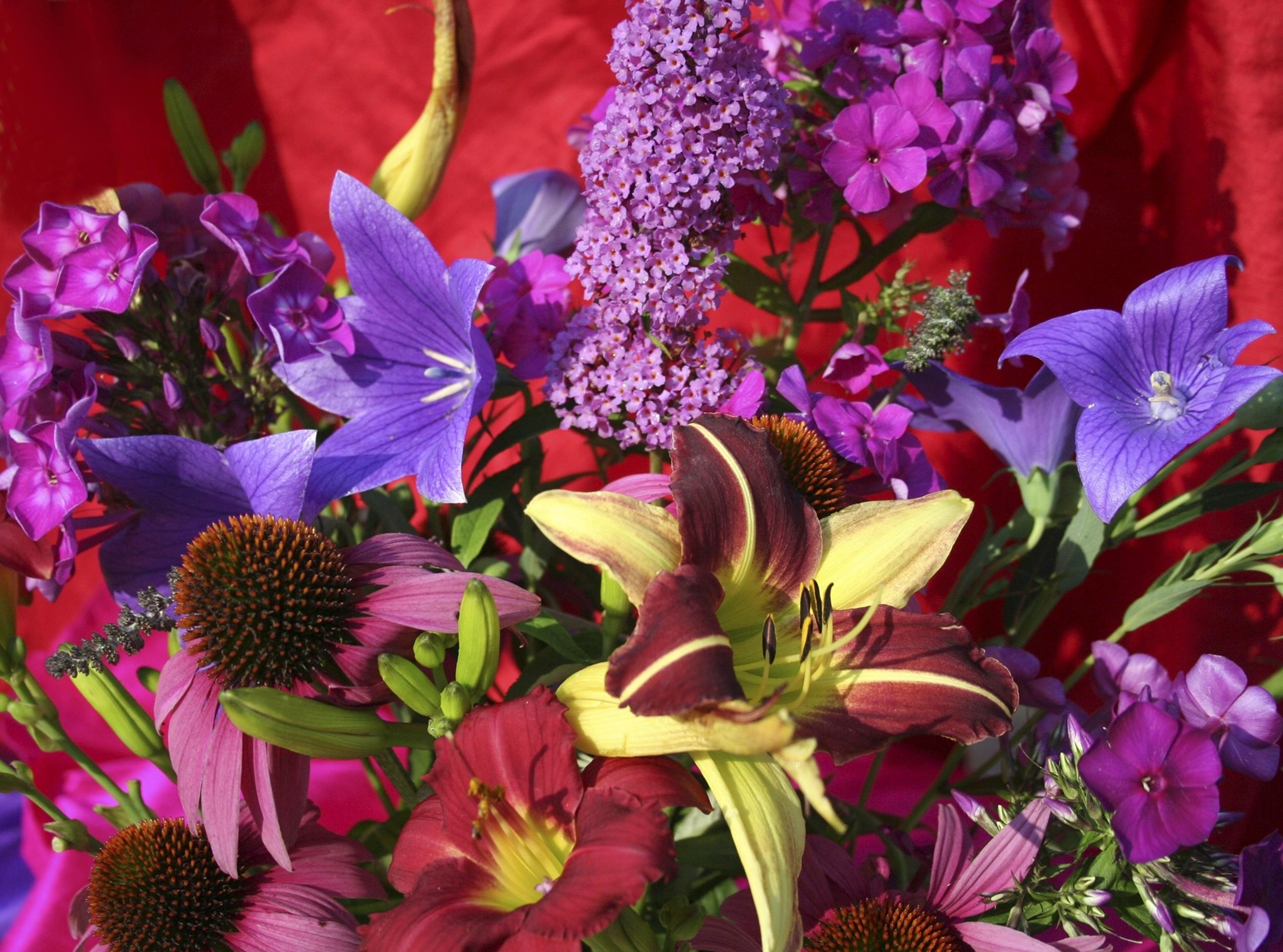 Gardensglory resized zwfptv