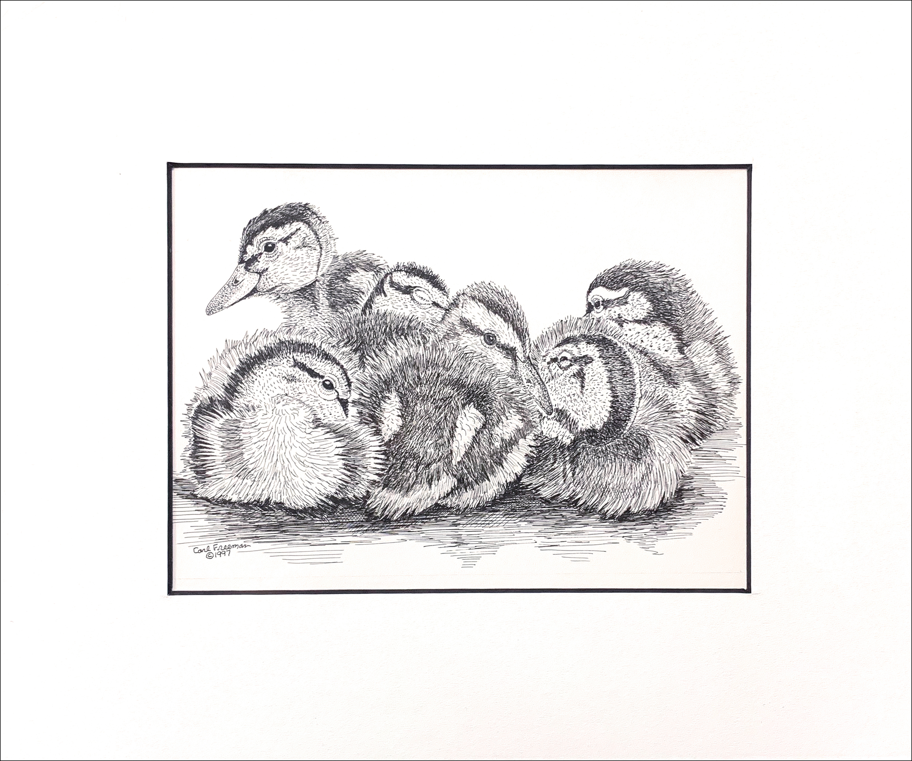 Baby mallards matted copy ljpwhc