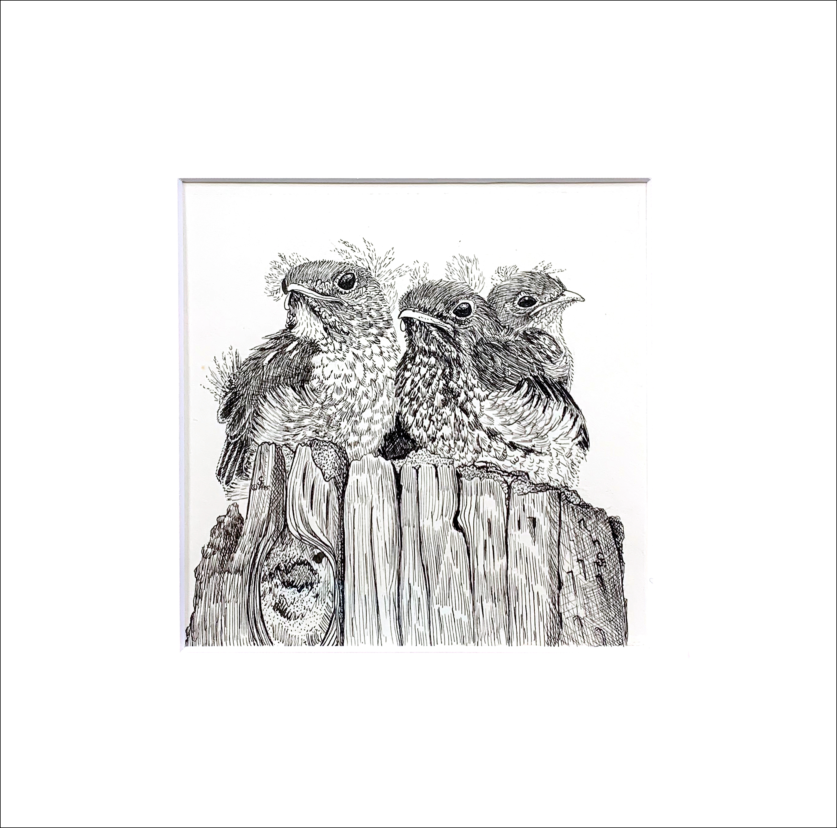 Baby bluebirds matted copy abxtxl
