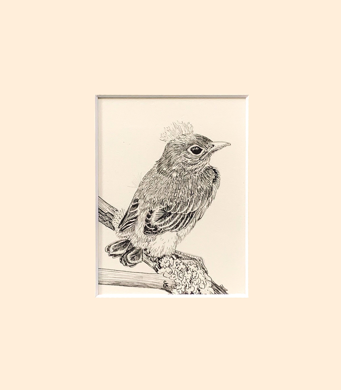 Baby bluebird matte piun5y