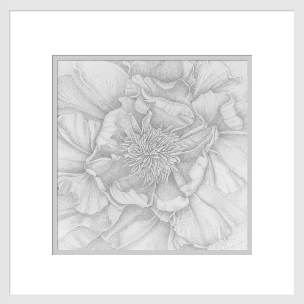 200822 in my neighborhood tree peony drawing 10x10 matted to 16x16 n839cb