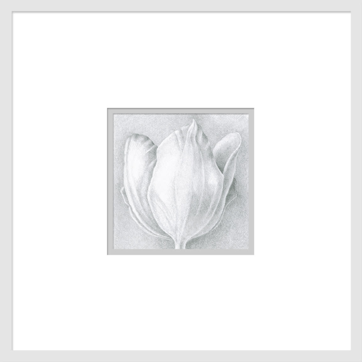 080701 orange tulip drawing series  1 6x6 matted to 16x16 e6ykuh
