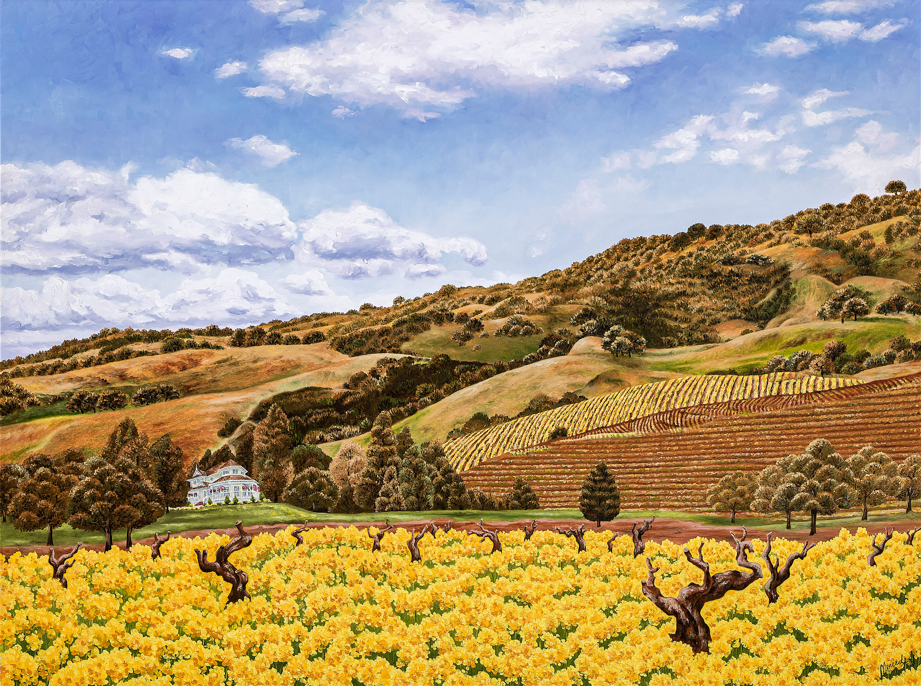 Sonoma old vines 27 x36 print small zdk1zs