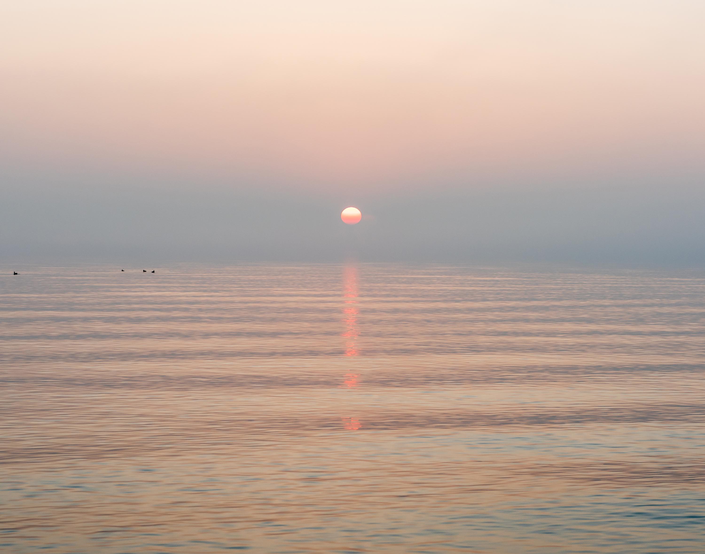 4 geese at sunrise qp8jip