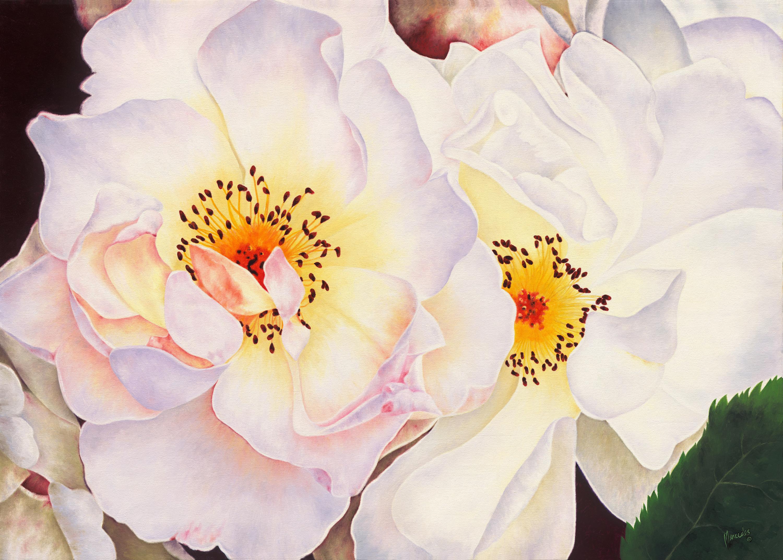 White roses s srgn copy tomakesmaller  tbkjuk