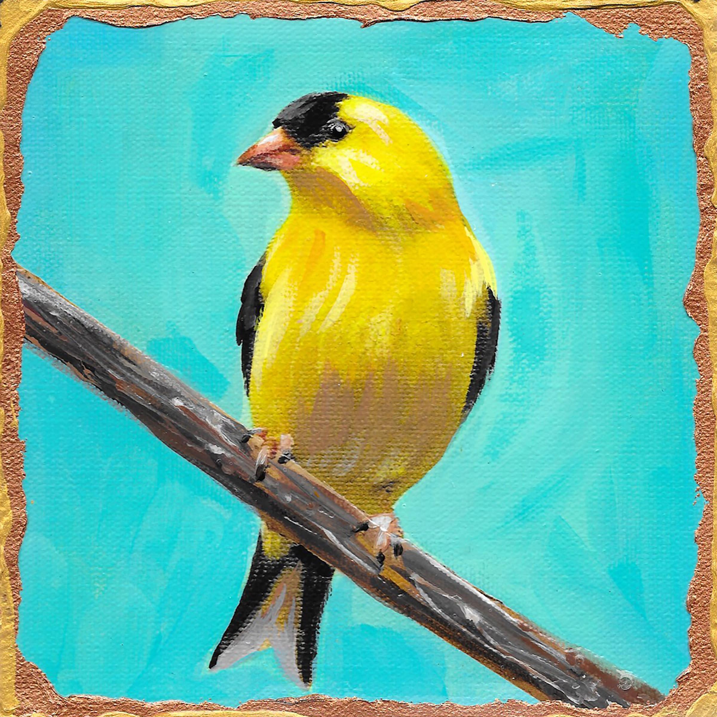 American goldfinch nrqkbu