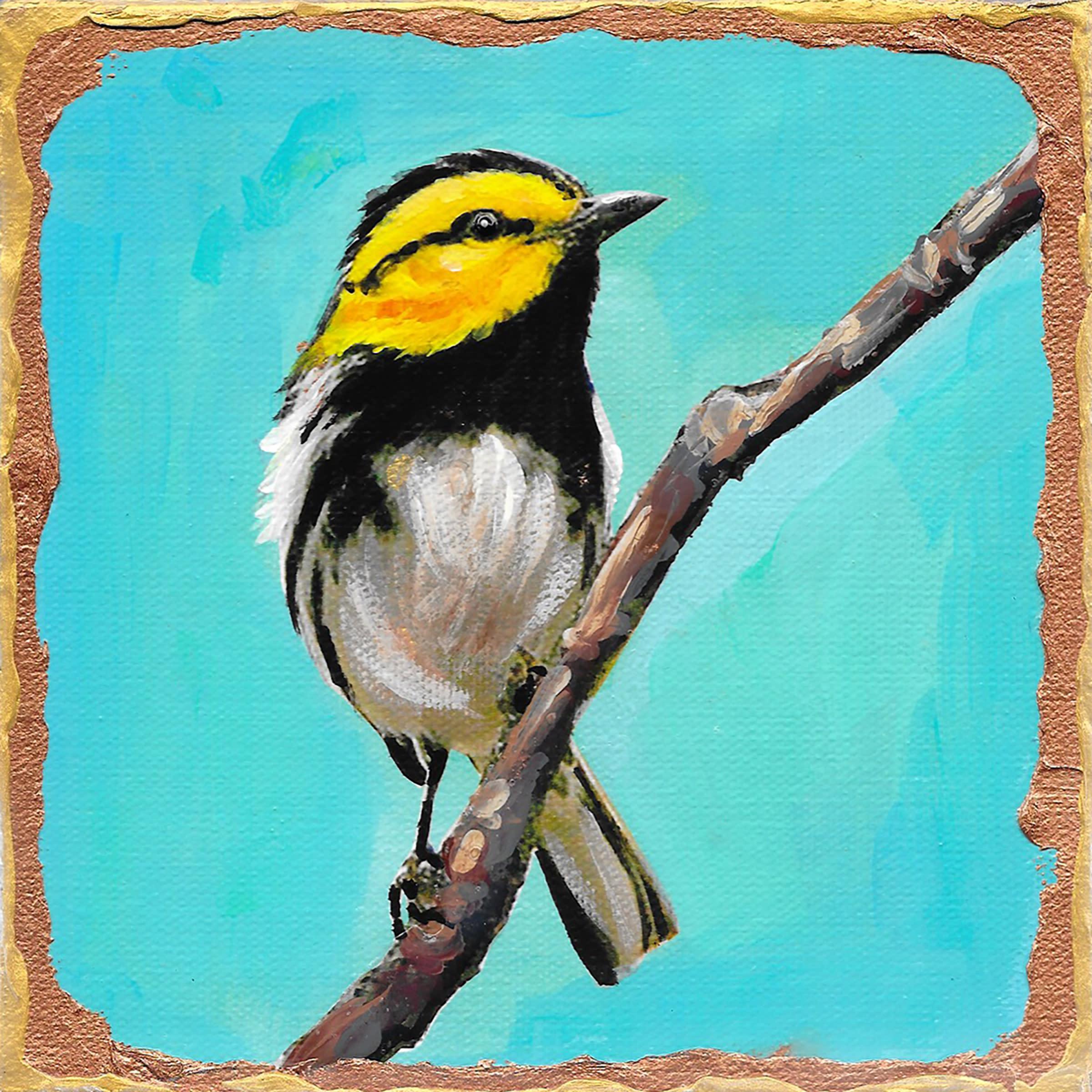 Golden cheeked warbler rvrii3