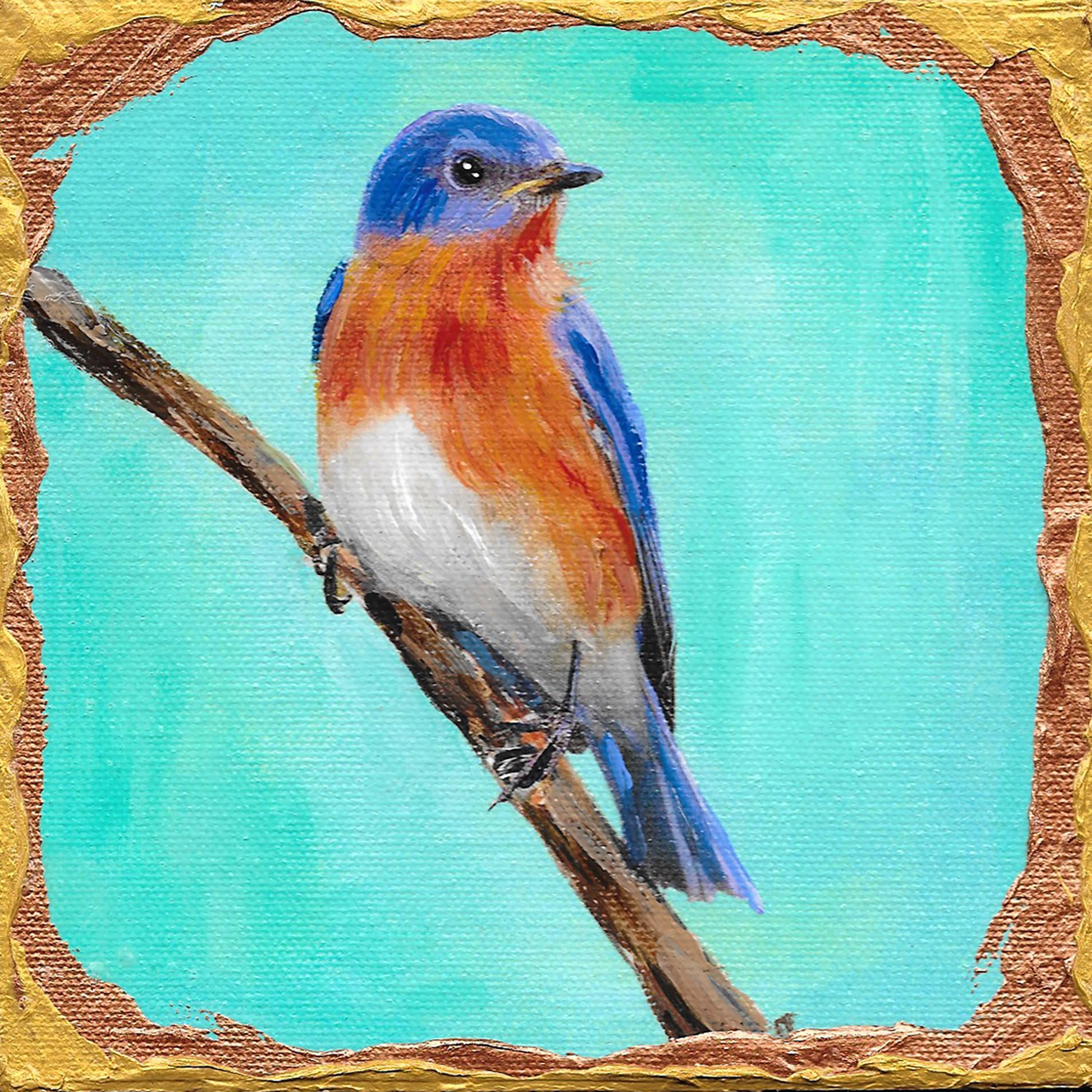 Eastern bluebird hjr8qk