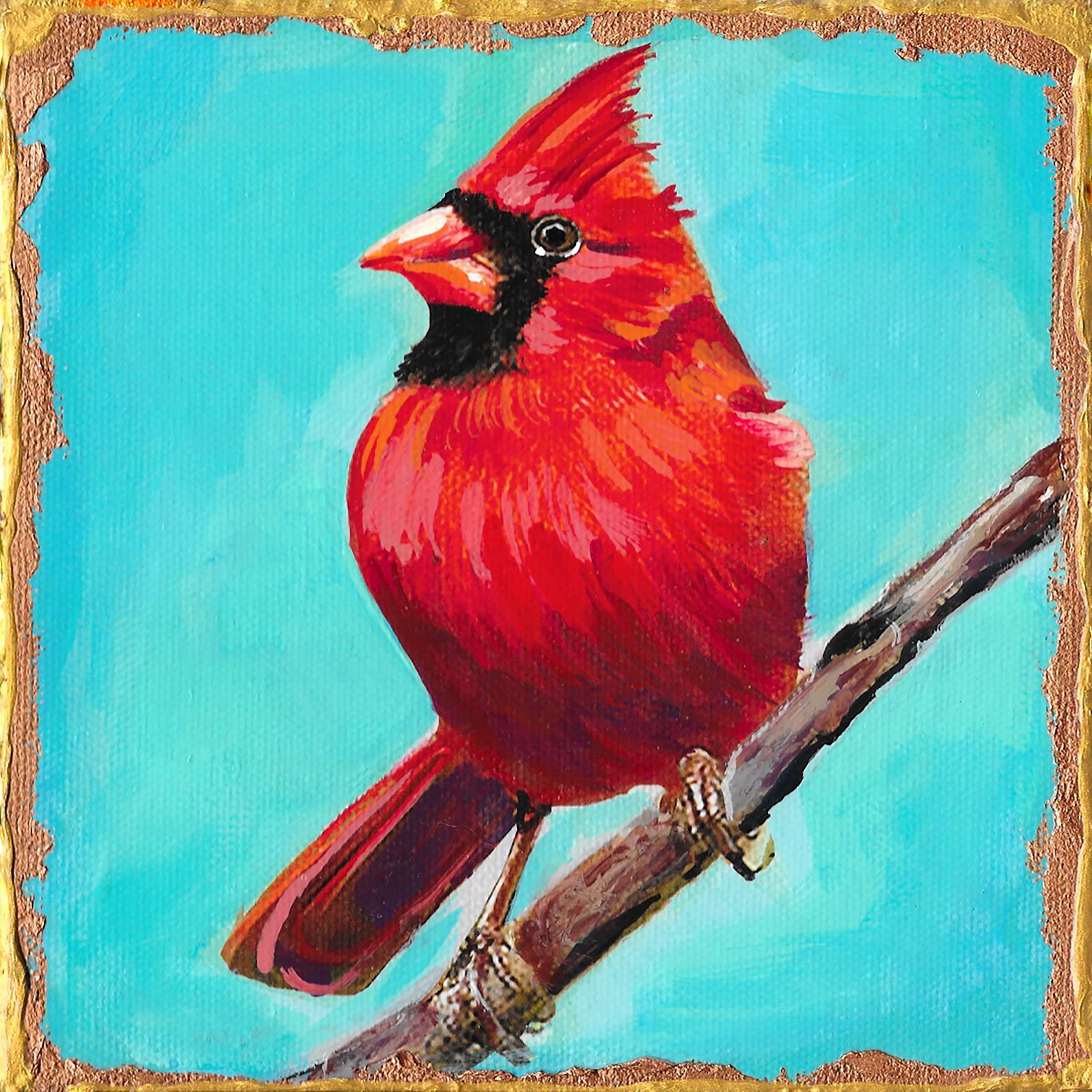 Male cardinal qtaztq