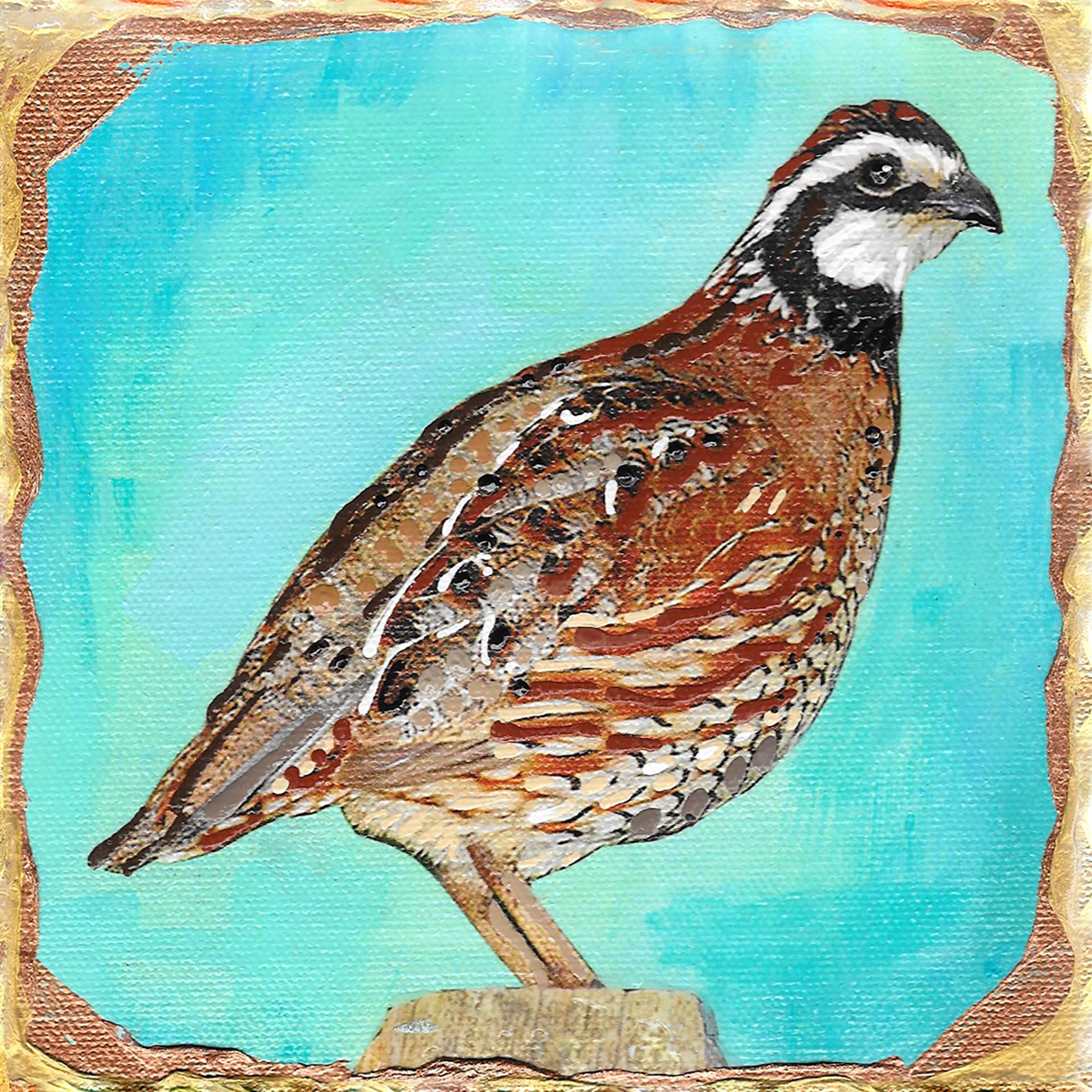 Bobwhite quail ocpxrn