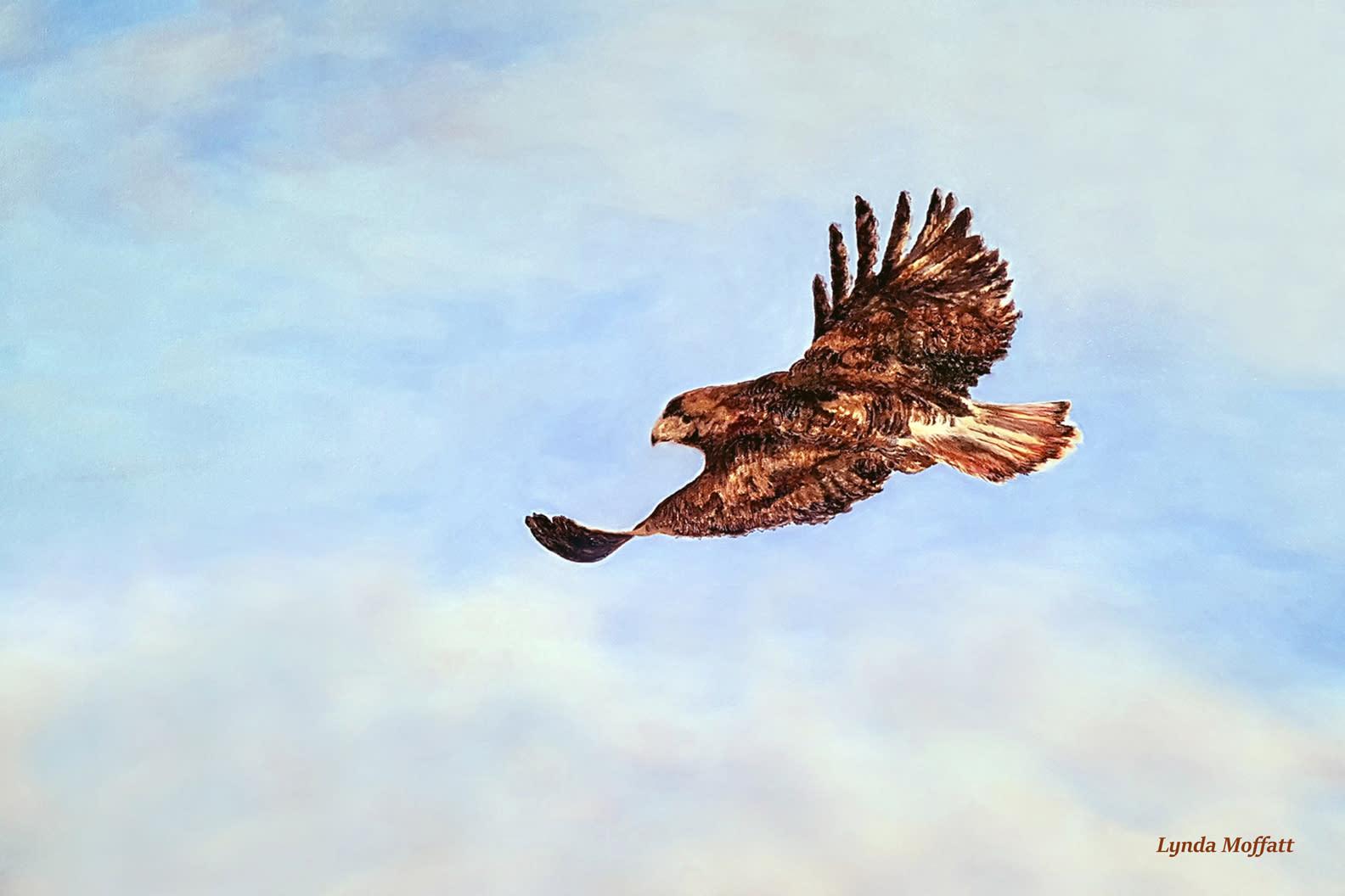 Redtailedhawk zuts9k