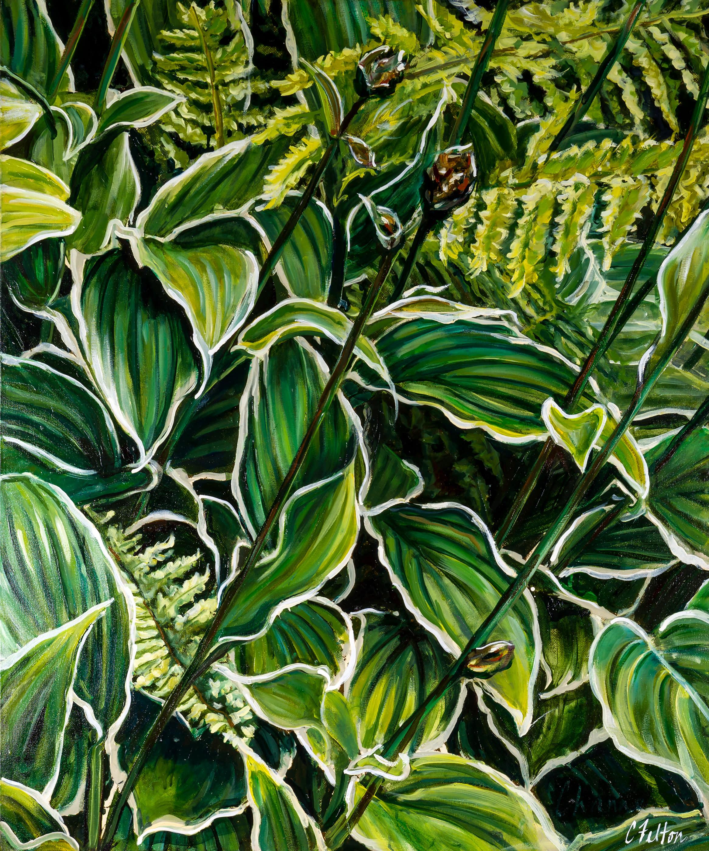 Rainforest 2 for original folder d6zgae