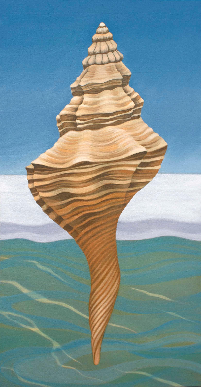 Florida horse conch vmbavs