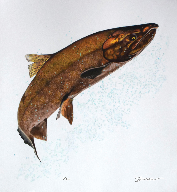 King salmon 12x13 5 print signed srwoxy