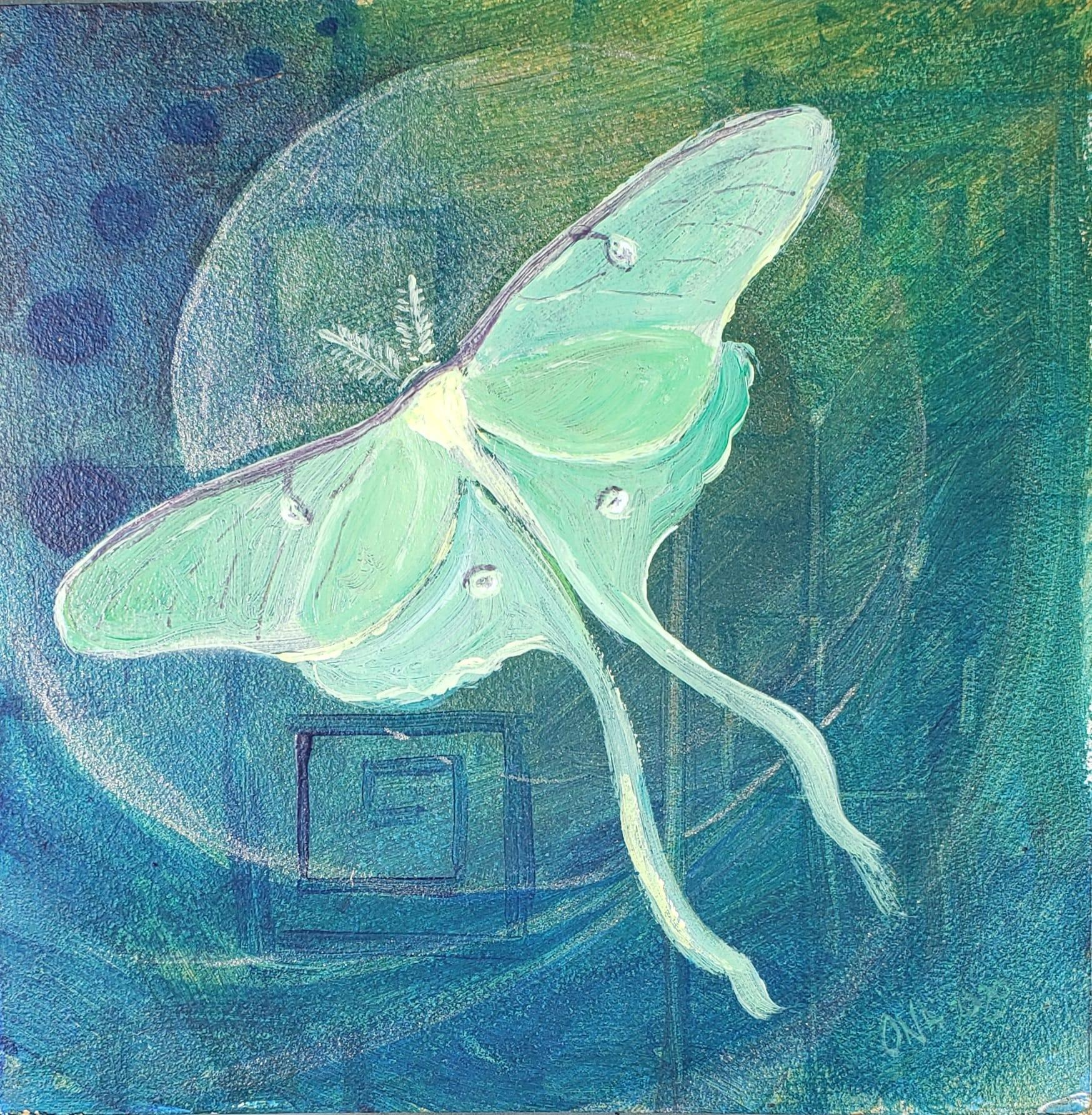 Luna moth dox5oz