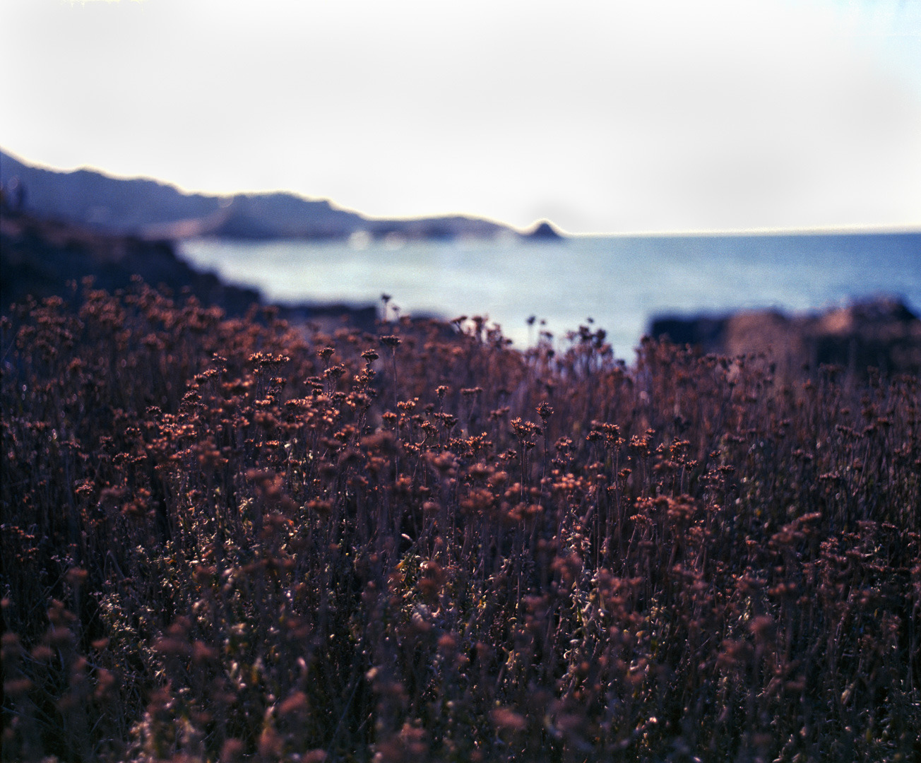 Pointlobos autumn lm4pcr