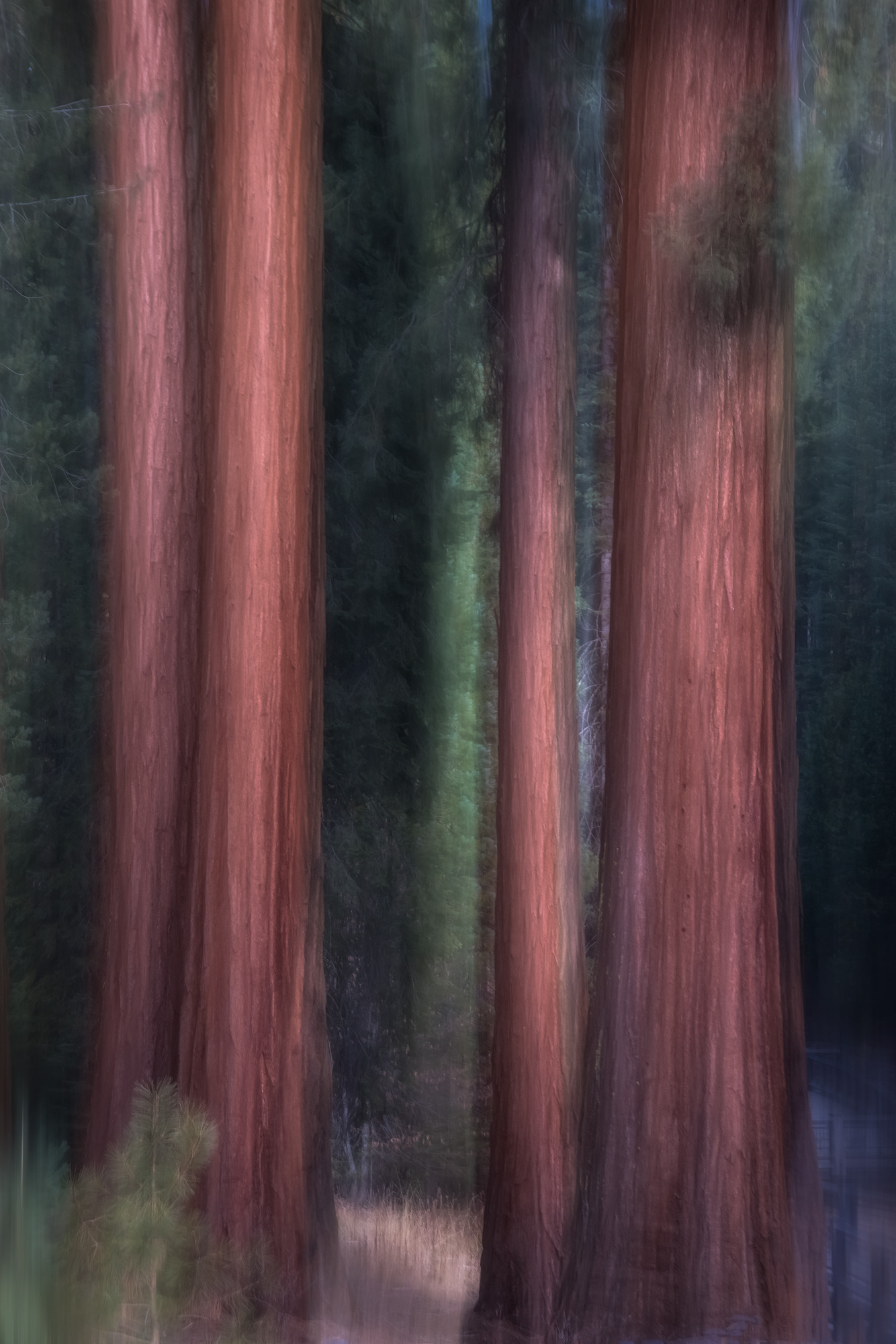 Big trees zydpje