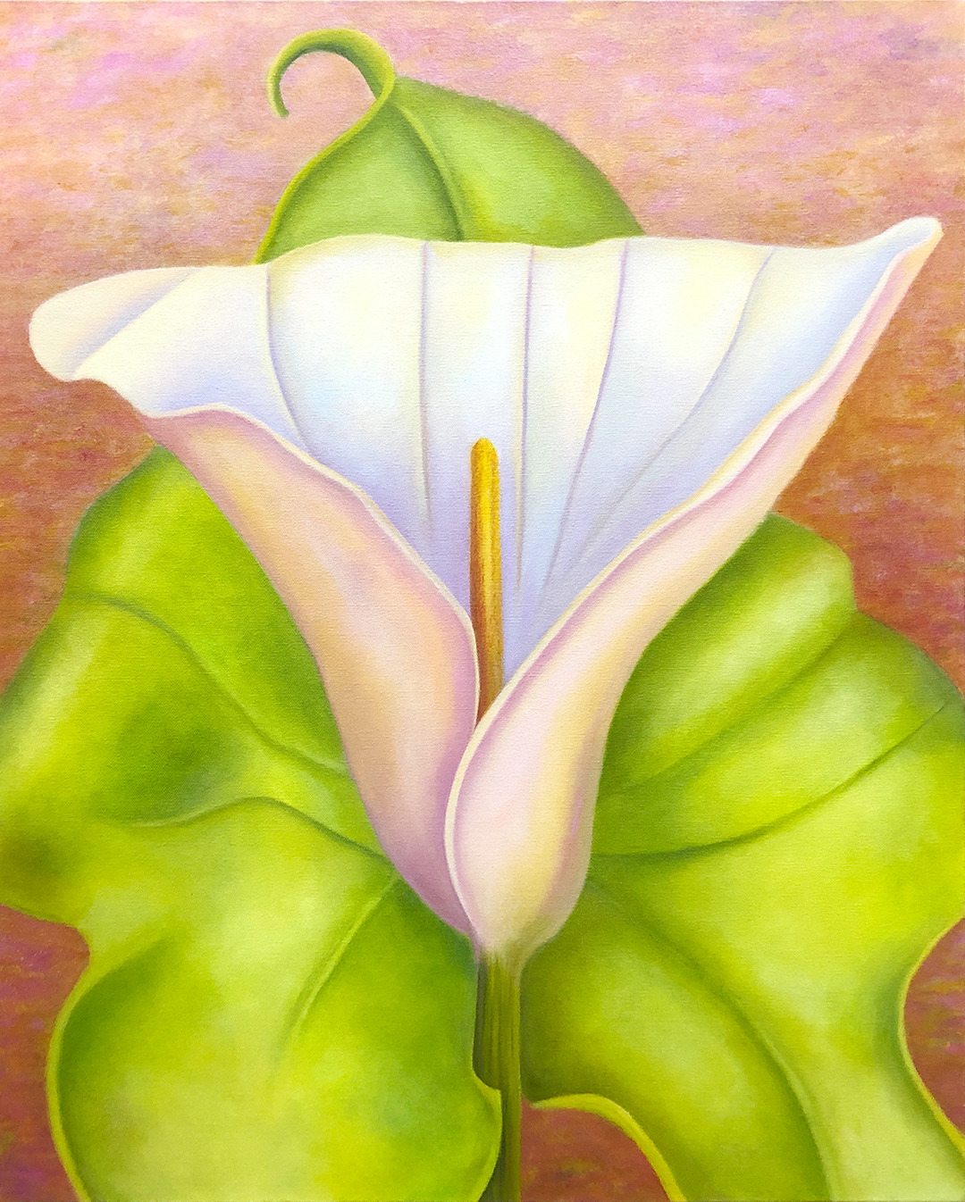 210126 ahern dance with me calla lily img 1564 qtvywy