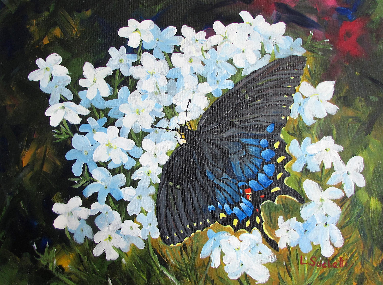 Black swallowtail 2 c5ls9a