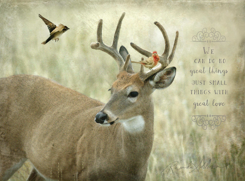 Deer with birds v s qtvug1