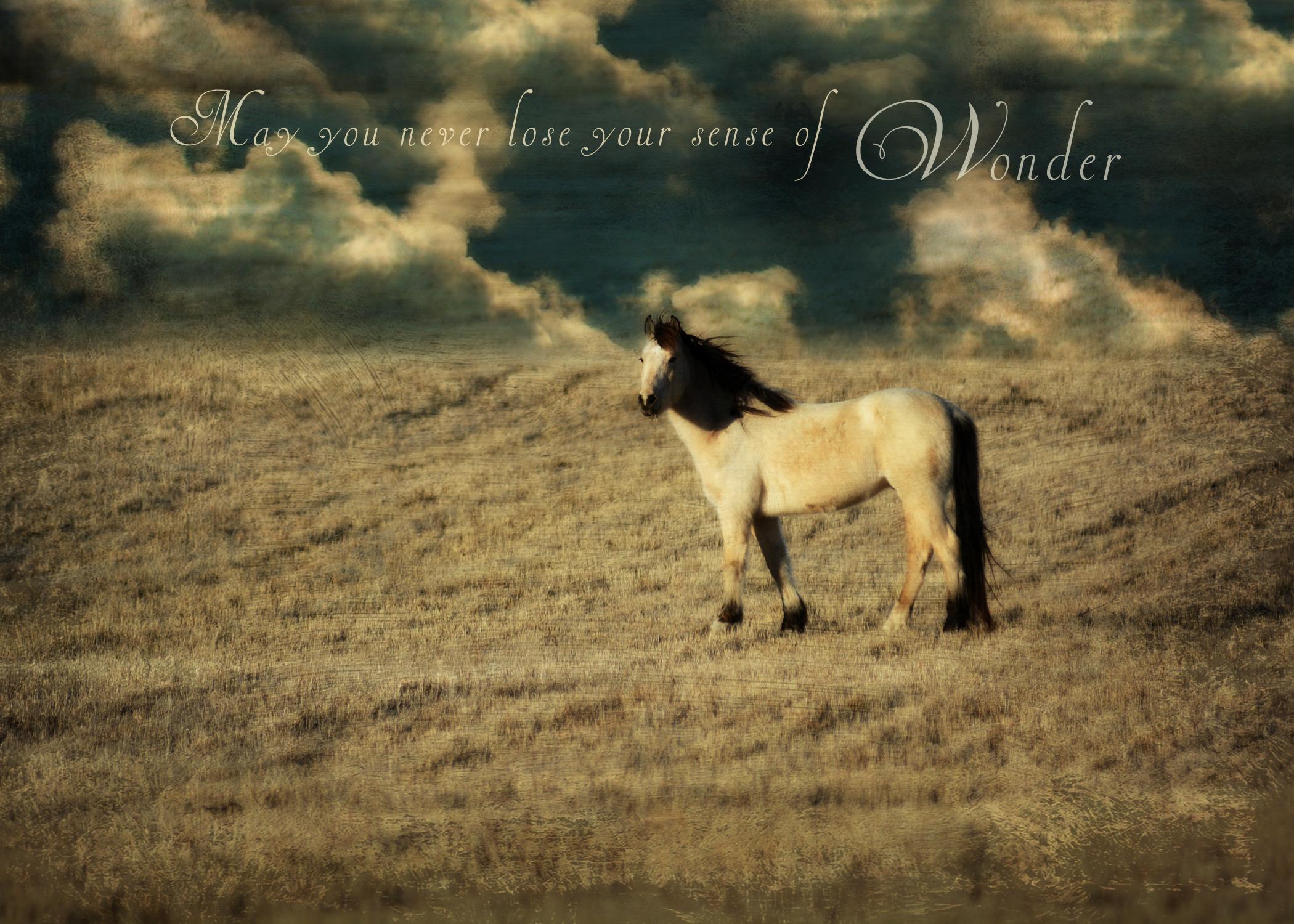 Horse wonder ss fkex8b